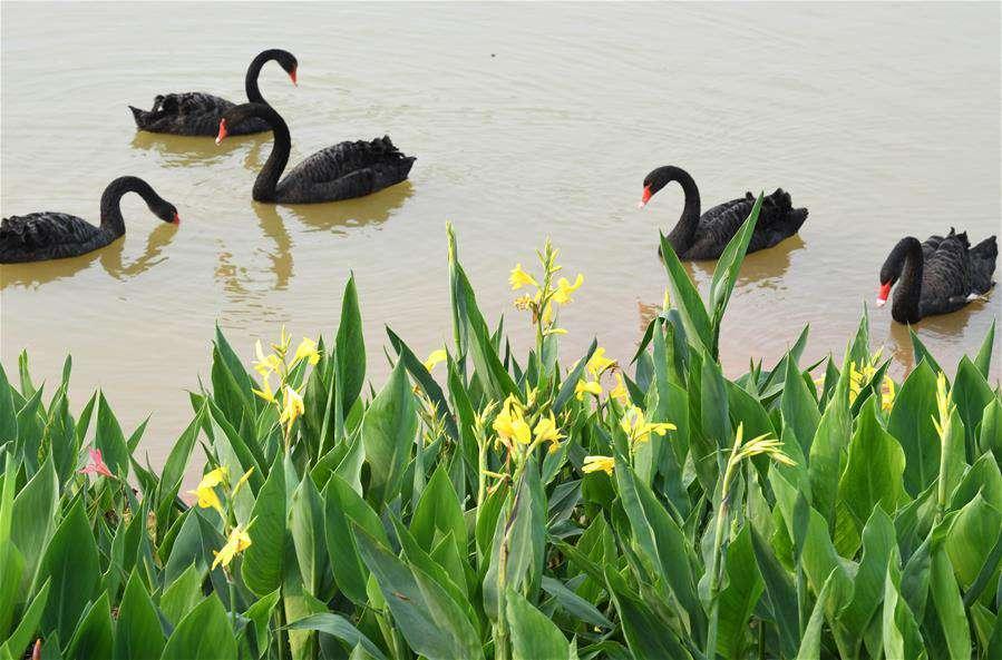 Spring scenery of Nanning Garden Expo Park