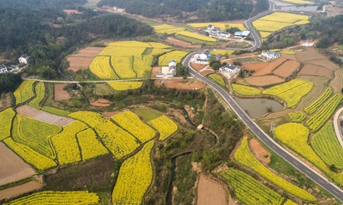 China's rural cooperatives support sales of farm products from Hubei