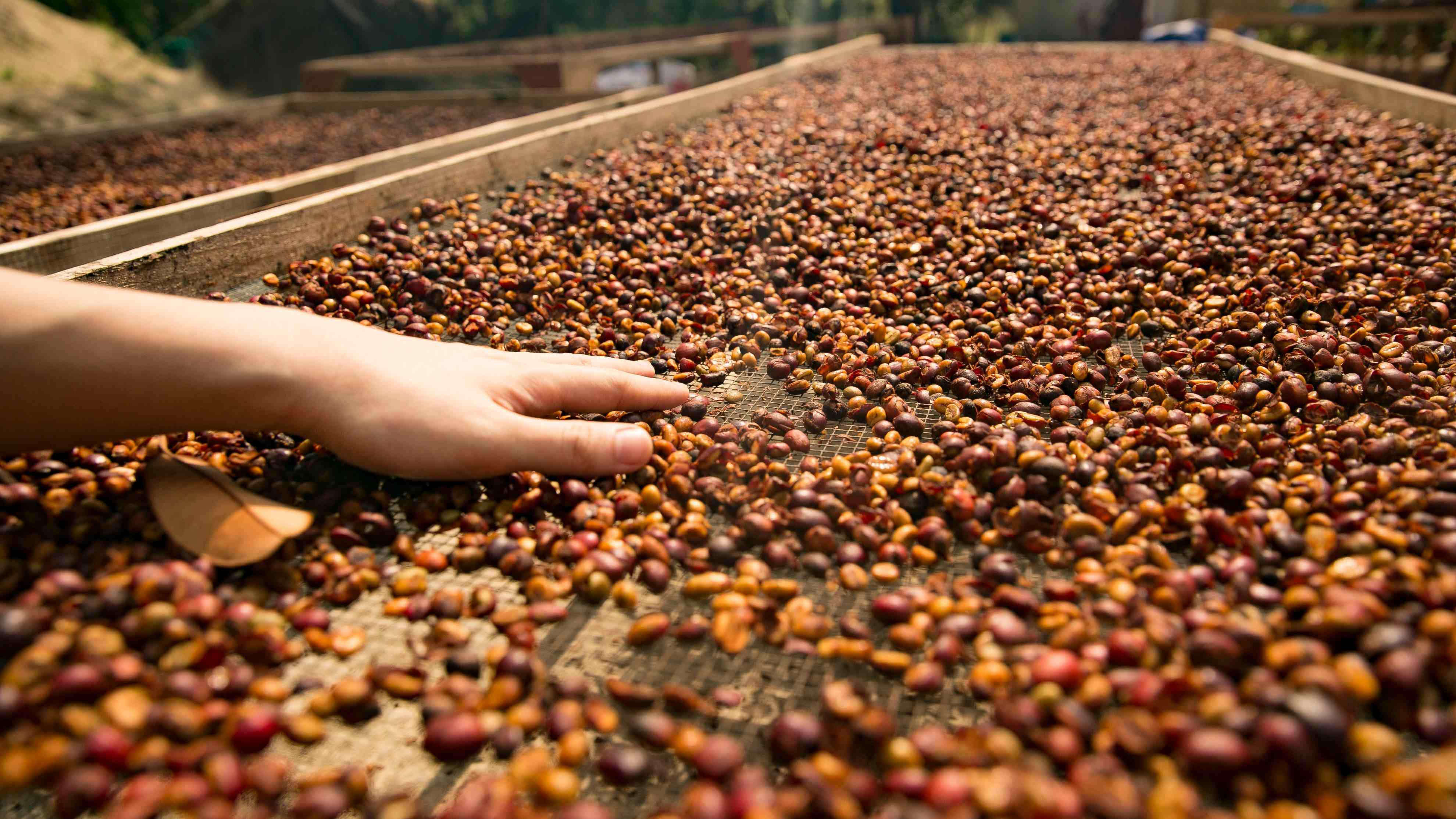 China's coffee consumption upgrading speeds up industrial layout