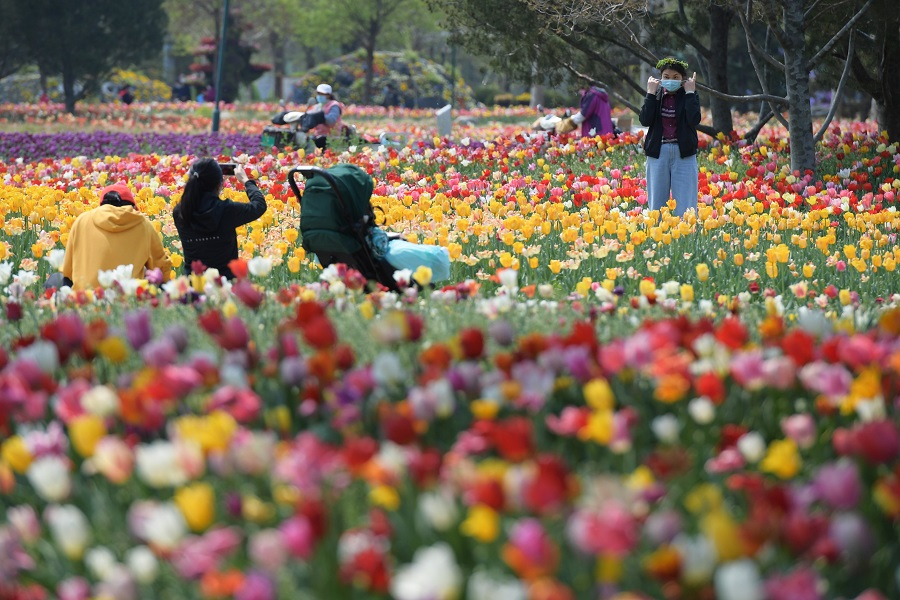 Sea of colorful tulips draws tourists in Beijing