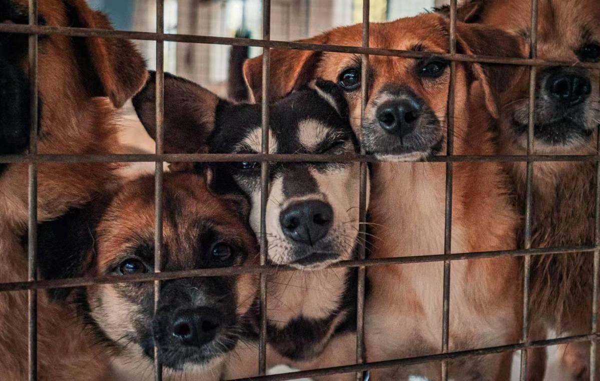Jiangsu expats shed pounds for shelter dogs