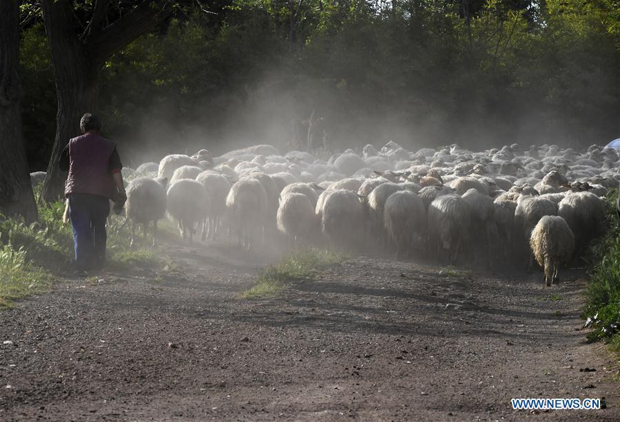 In pics: animal husbandry in Rome, Italy during coronavirus lockdown