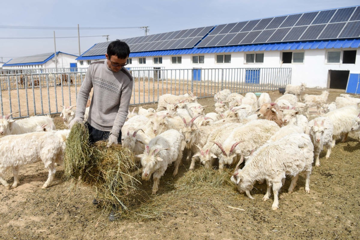 Supportive policies help herdsman out of poverty