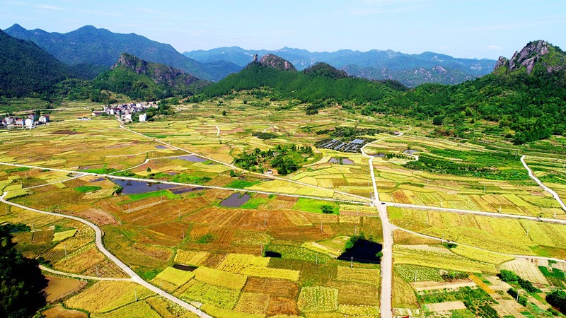 China's agriculture upgrade to accelerate in next decade: report