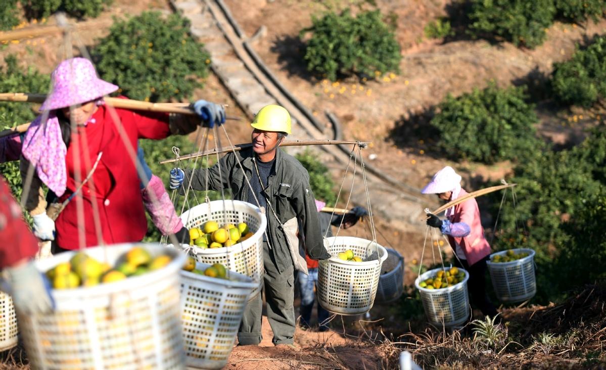 Orange growers enjoy fruits of wealth program