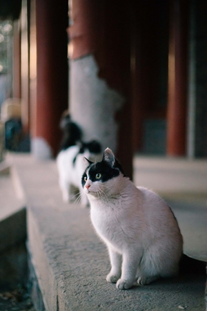 Profile of stray cats by Peking University students goes viral online