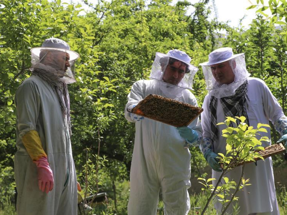 Bee farmers show trays from beehives at bee farm in Afghanistan