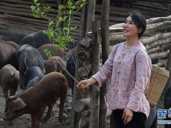 The Post-90s Pig Breeder Girl in Qinling Mountain