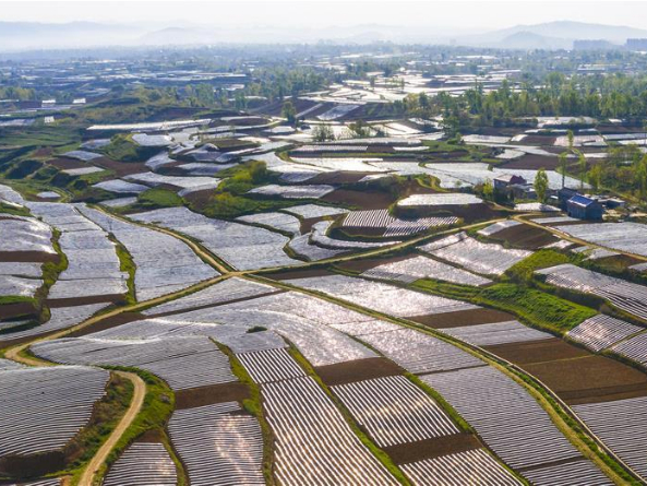 In pics: pepper and tobacco fields in Shaanxi