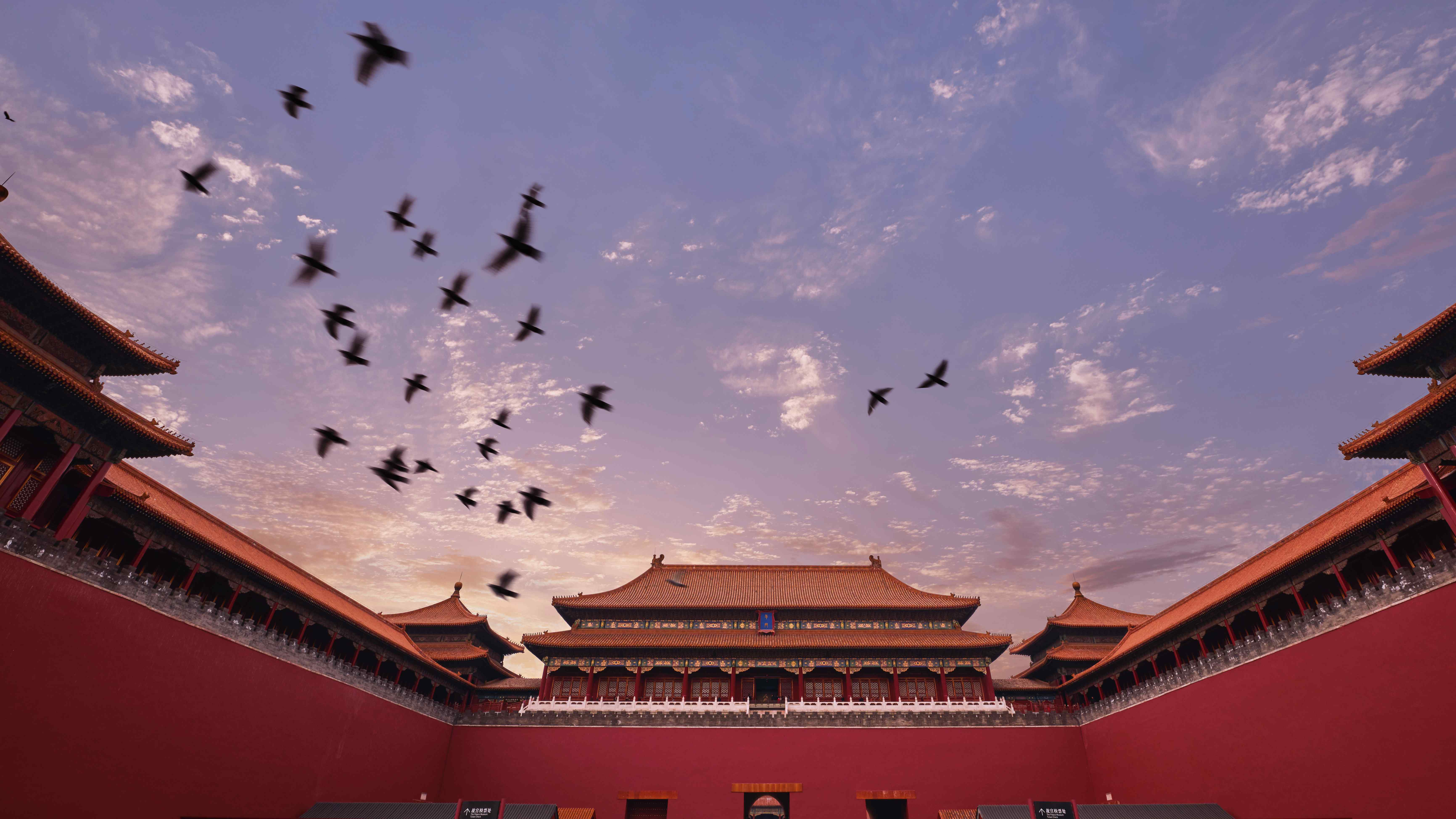 Over 1.5 million migratory birds travel to Beijing