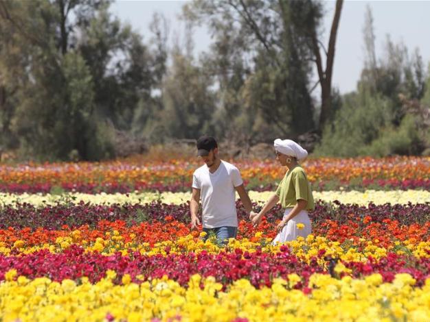 In pics: buttercup field near southern Israeli Kibbutz Nir Yitzhak