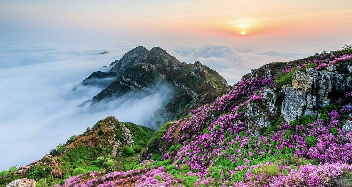 Online exhibition showcases natural beauty of Dalian