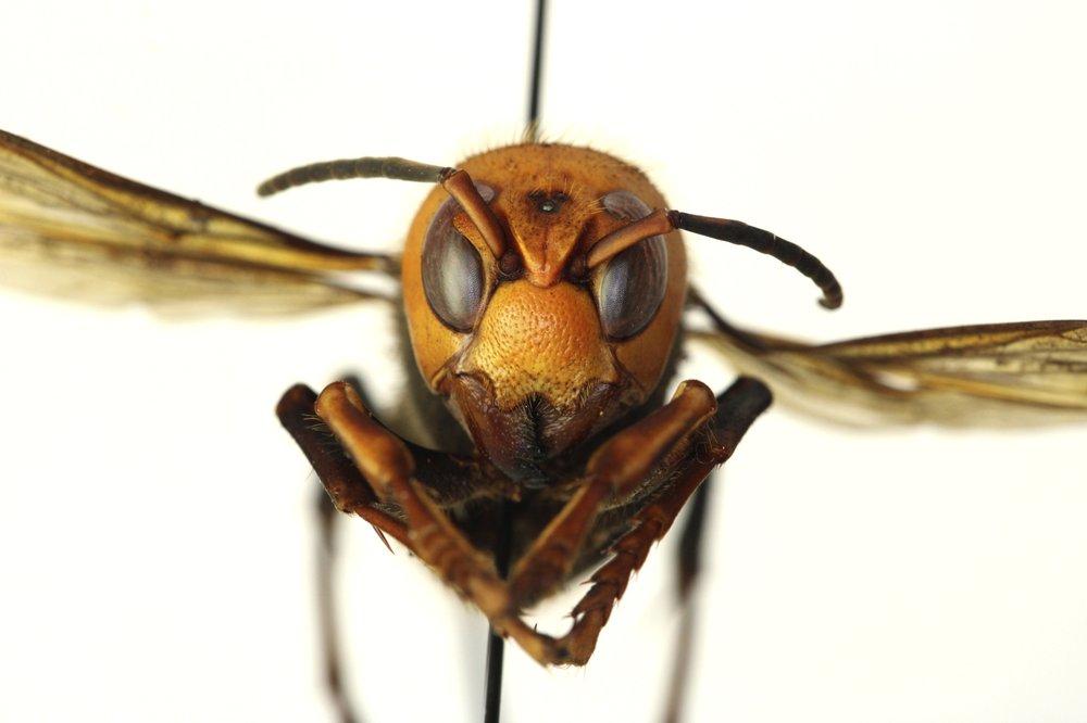 hornets.jpeg
