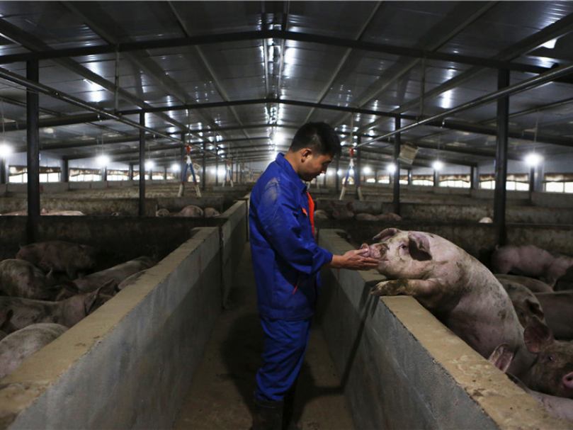 Ministries stay vigilant in fight against swine fever