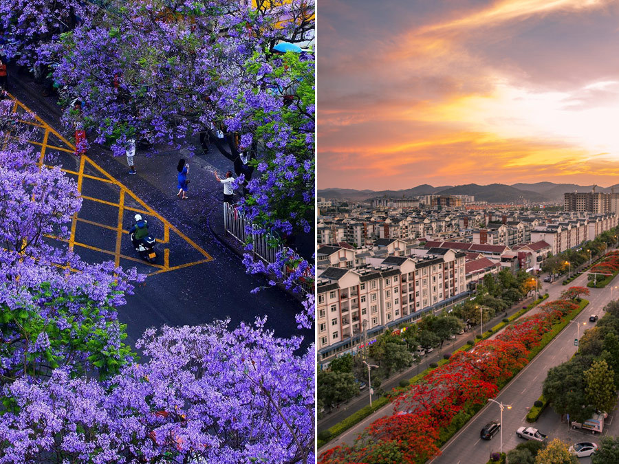 Combo photos show the beauty of blooming flowers in China's Yunnan