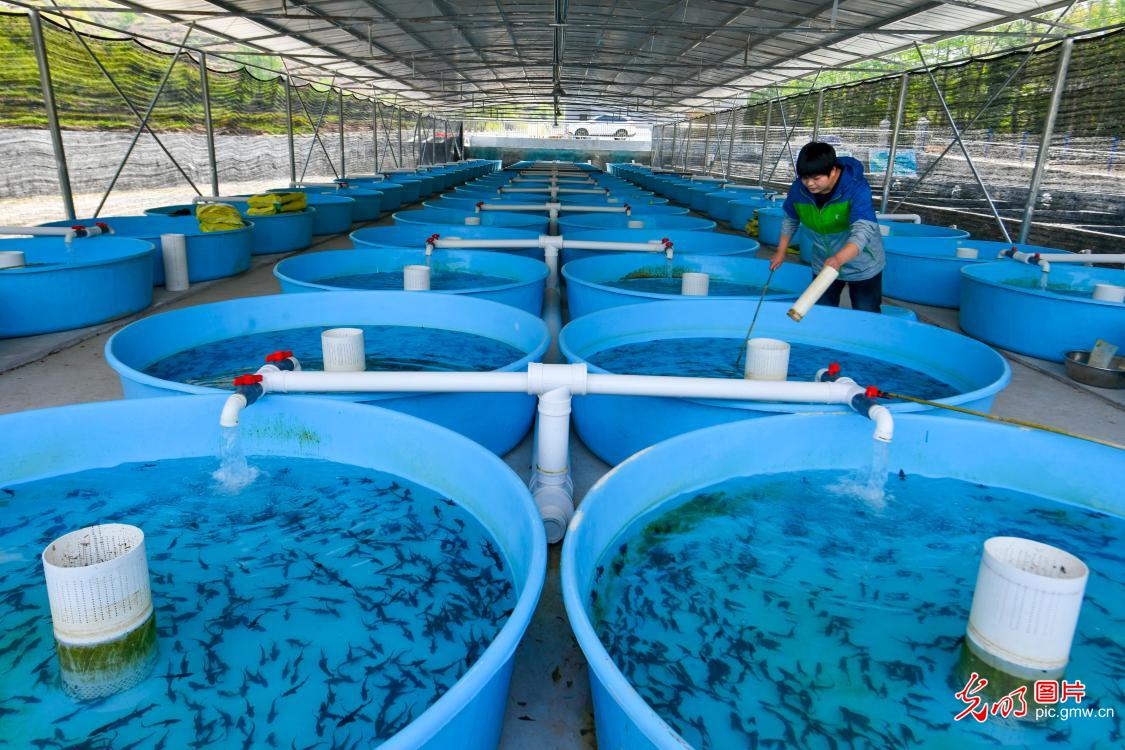 Cold water fish helps increase local farmers' income in SW China's Chongqing