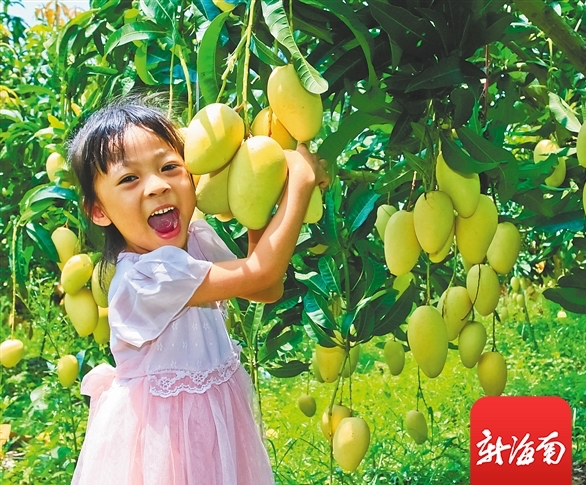 Come to Hainan to start the tropical fruit picking journey
