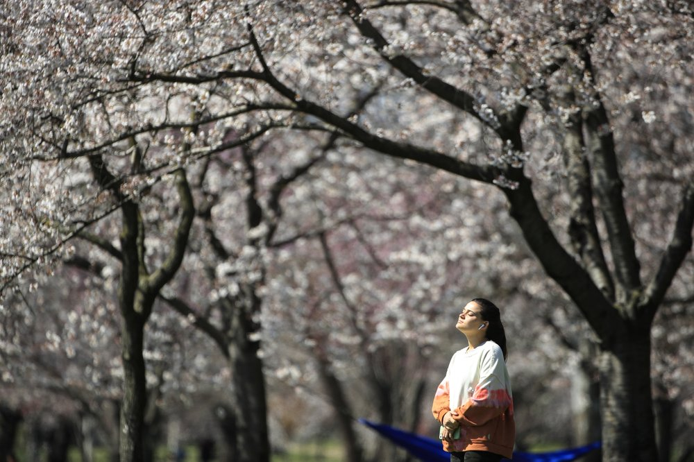 Among the mainstays of 2020 claimed by the pandemic: Spring
