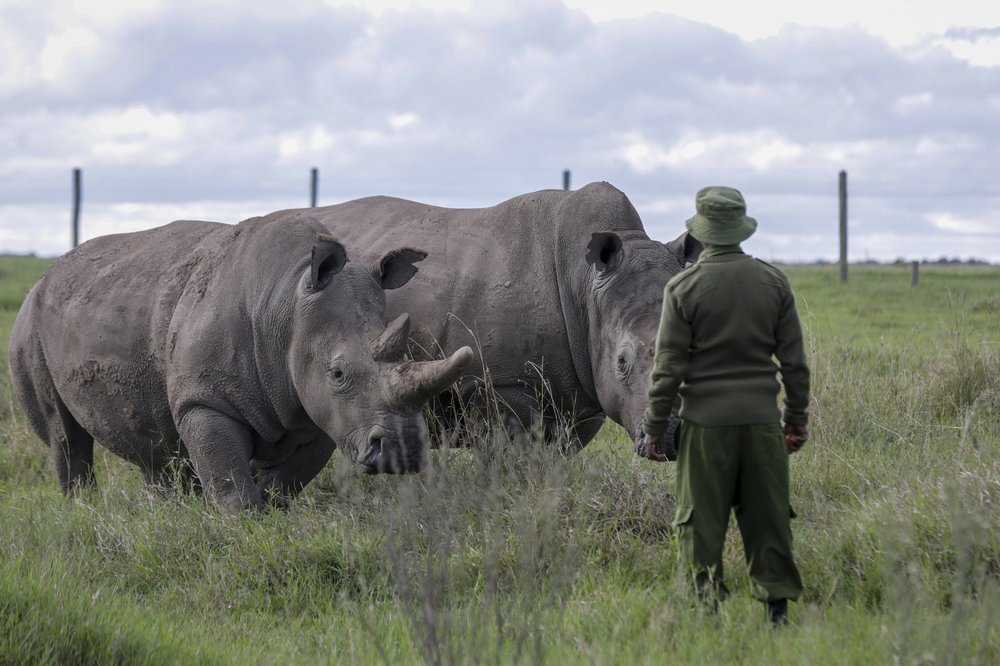 Africa's endangered wildlife at risk as tourism dries up