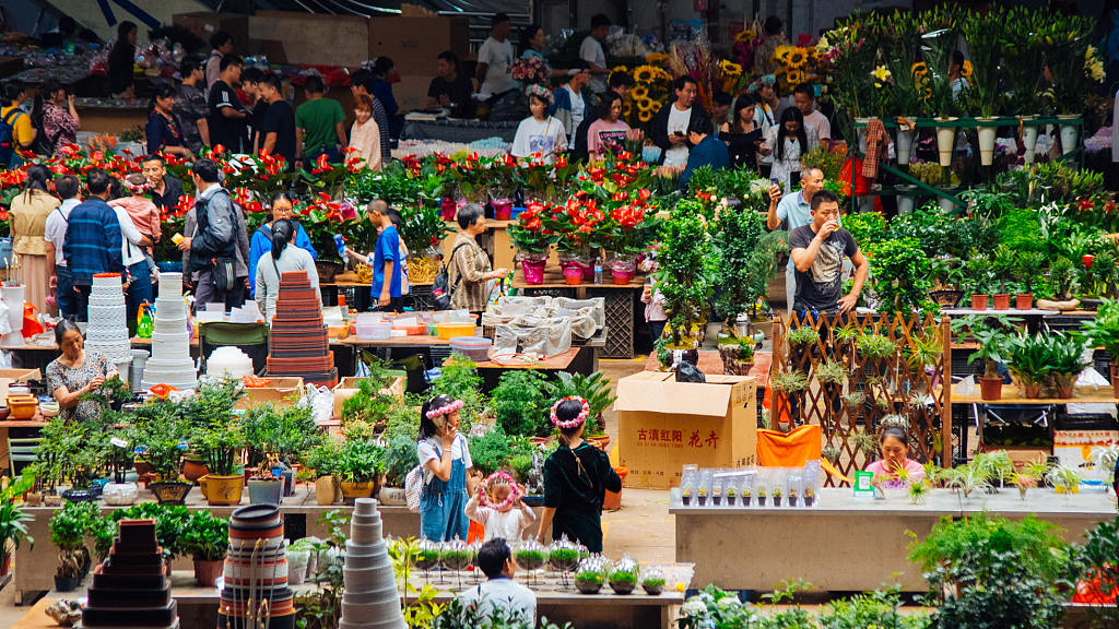 Auctioned transaction at Kunming flower market down 10.8 pct