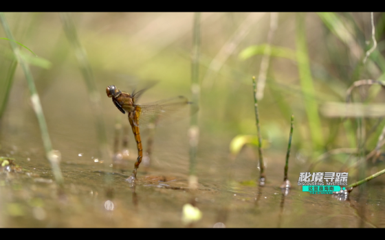 The metamorphosis of the Dragonfly– the second episode of Discovering Mysteries