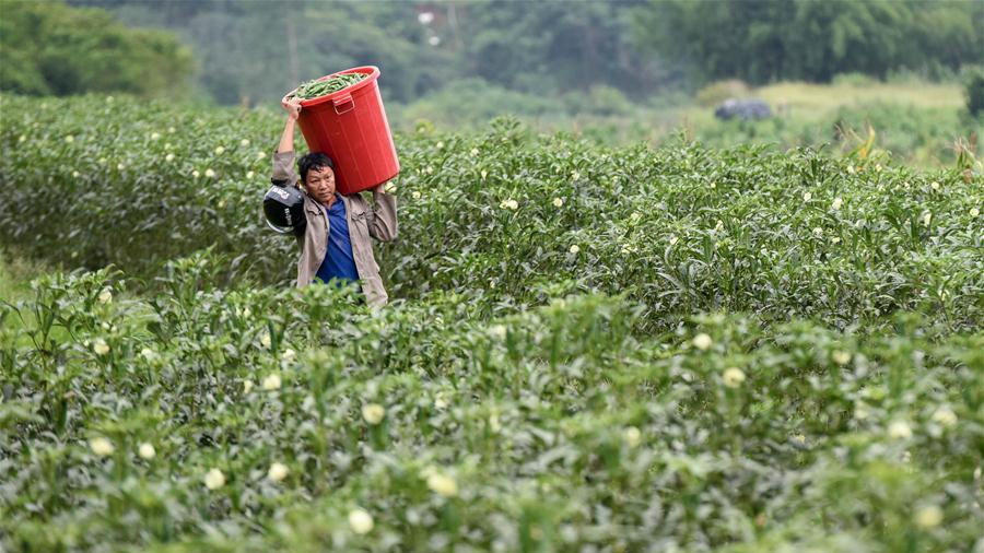 China to ensure eliminating rural poverty in 2020