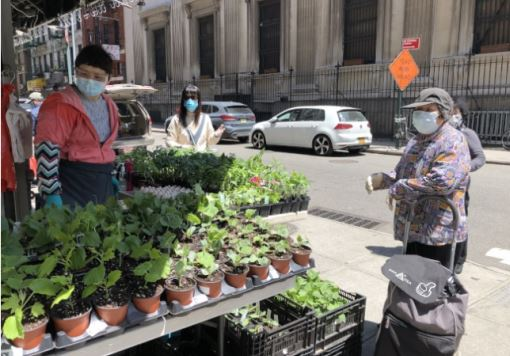 Self-grown vegetable shoots welcomed by Chinese in New York