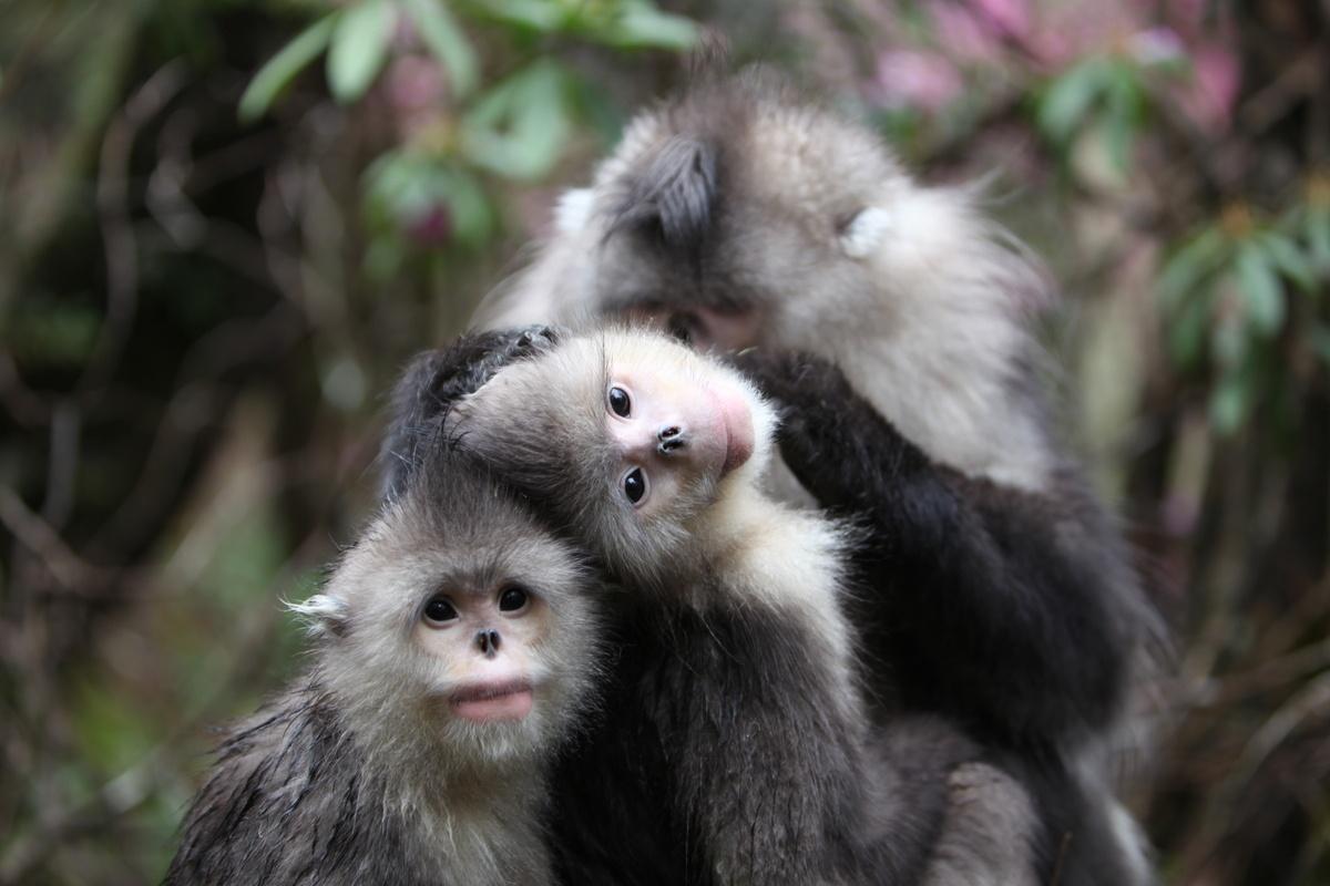 New database on China's biodiversity released