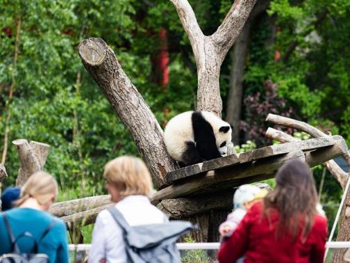 Visitors visit Panda Pavilion of Zoo Berlin in Germany