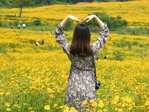Wuhan park's Golden-mane coreopsis becomes online hit