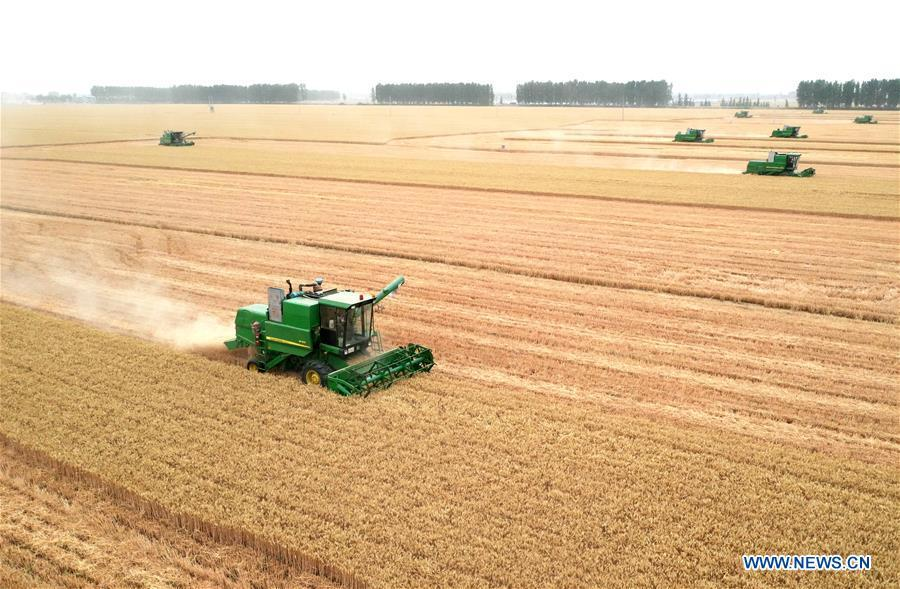 Harvesters work at wheat fields in Zhoukou, Henan