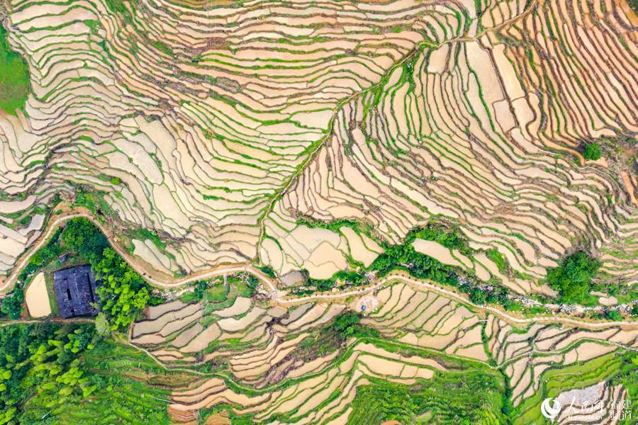 Picturesque terraced paddy fields in SE China's Fujian