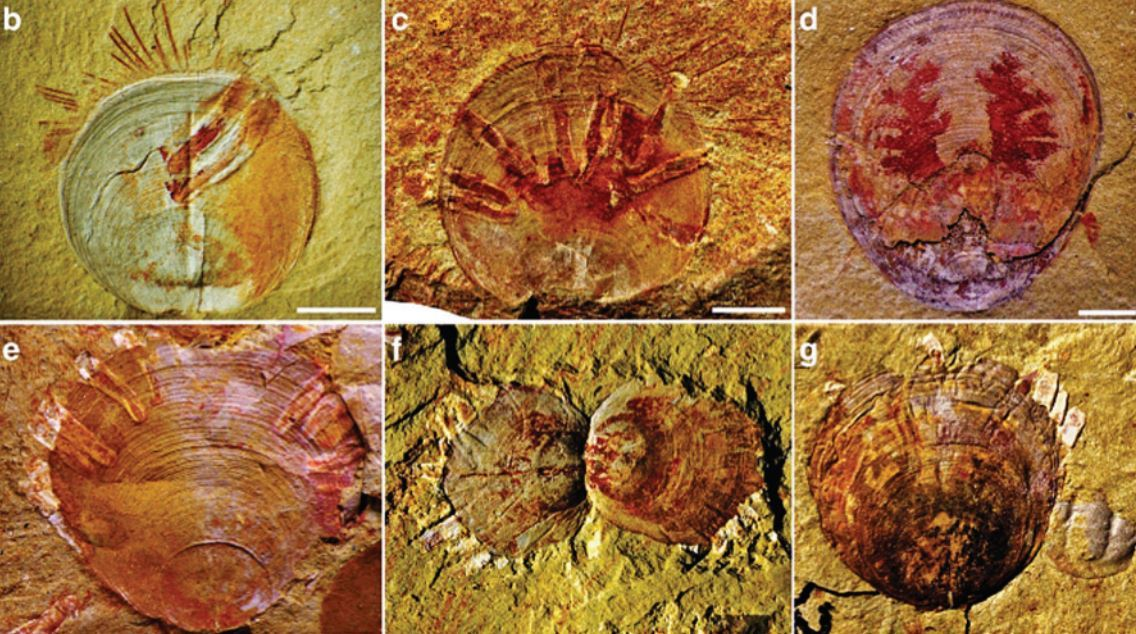 Oldest evidence of parasites discovered