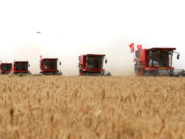 Large-scale harvest work of wheat by agricultural machinery starts in Hebei