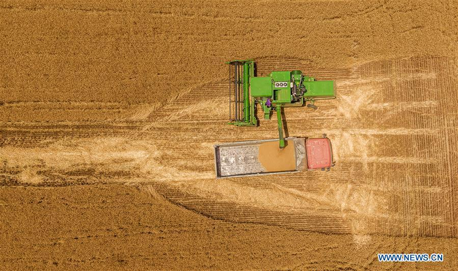 Agricultural machinery harvests wheat across China