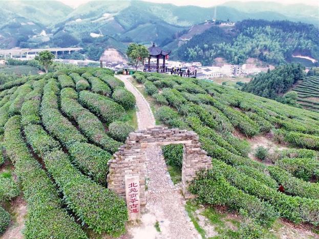 Tea exports rise in E China's Fujian