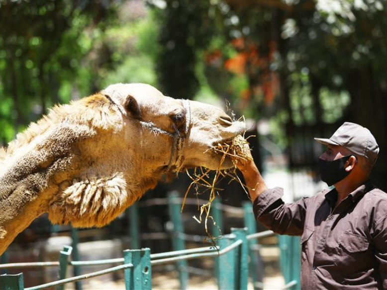 Closed Egyptian zoo sees gloomy, lonely animals amid COVID-19 outbreak