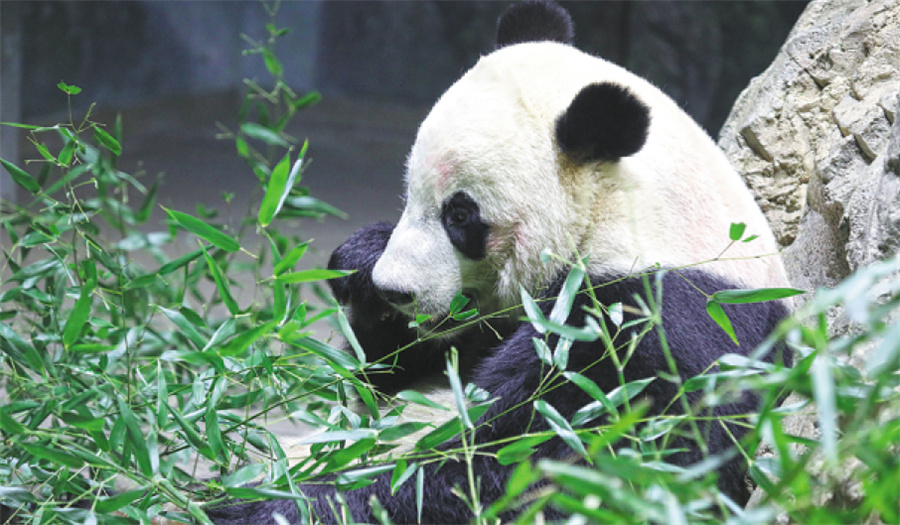 National park for pandas to open this year
