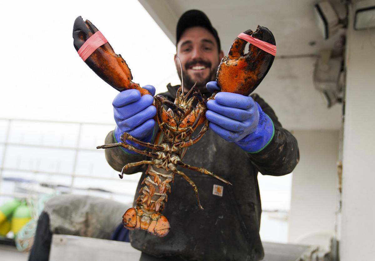 Experts urge no tariff change on US lobsters
