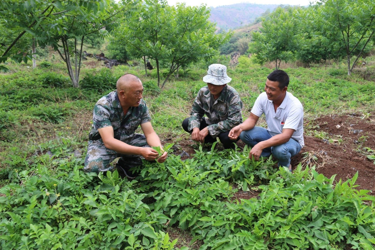 China's Yunnan Province brings prosperity to once impoverished border villages