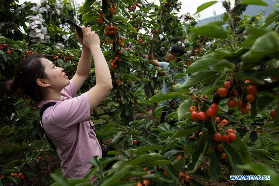 Cherry industry boosts local economy in Hanyuan, Sichuan