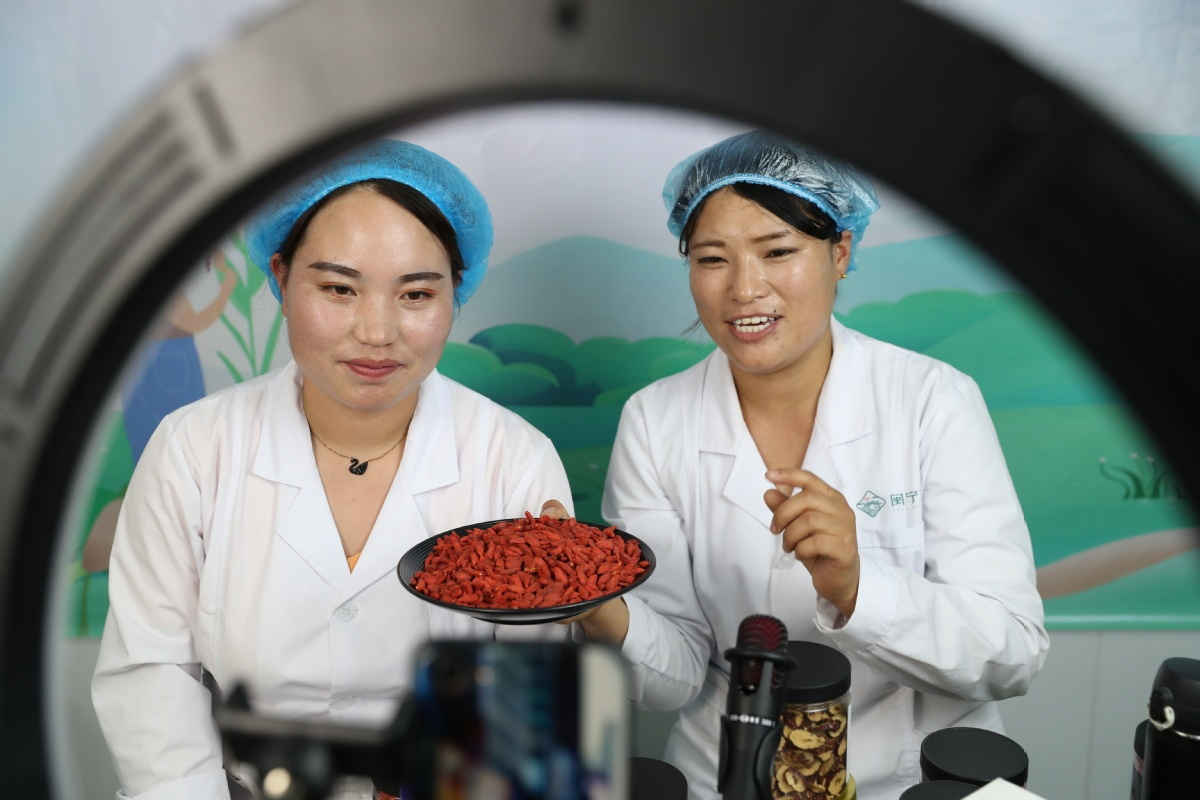 Wolfberries give fruit to poverty relief in Ningxia