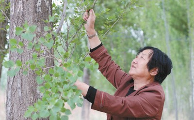 """""""One Tree village"""" in NW China now has trees everywhere"""