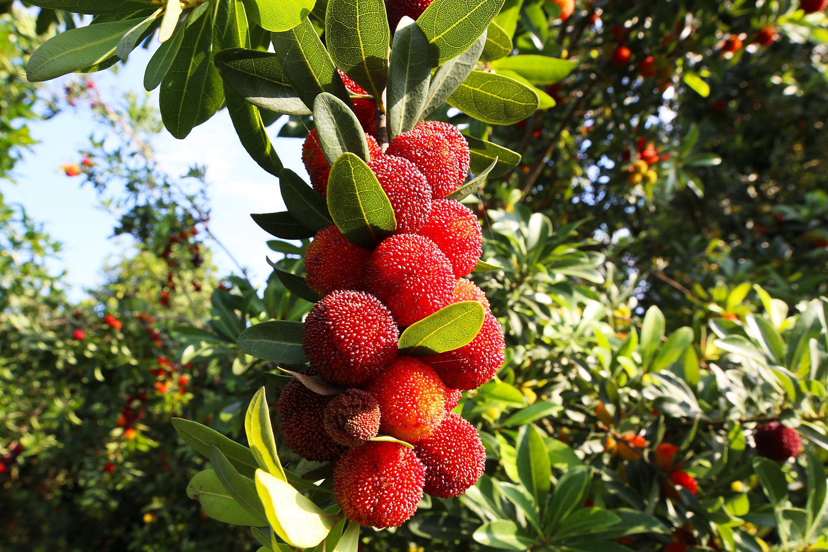 Favorable policies help fruit farmers shake off poverty