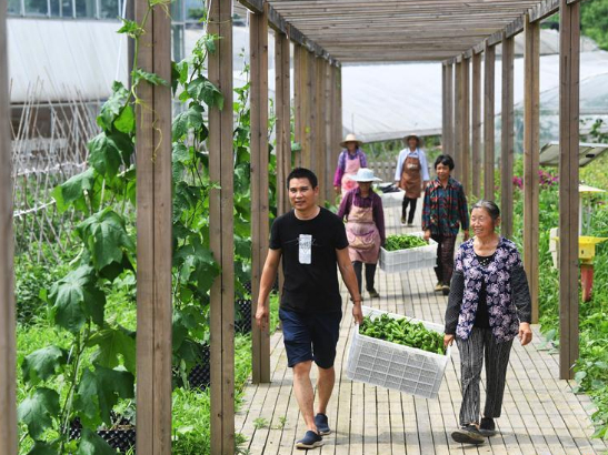 Alpine vegetable industry helps local villagers to increase income in Chongqing