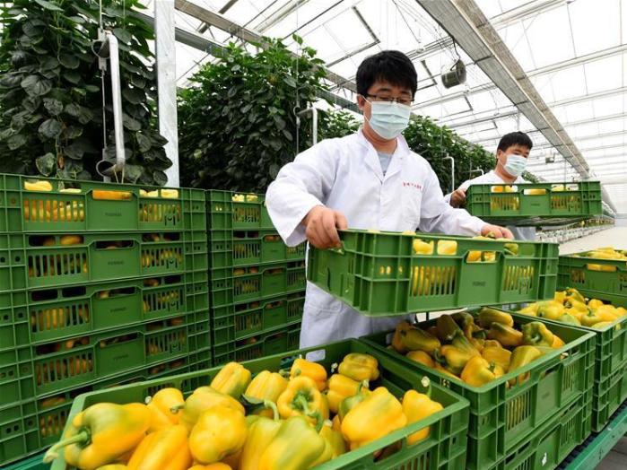 North China's Hebei rushes to replenish Beijing's vegetable supply