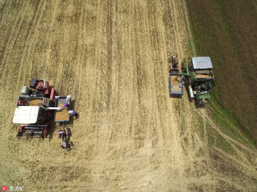 Henan seeks major 5-year boost in grain output