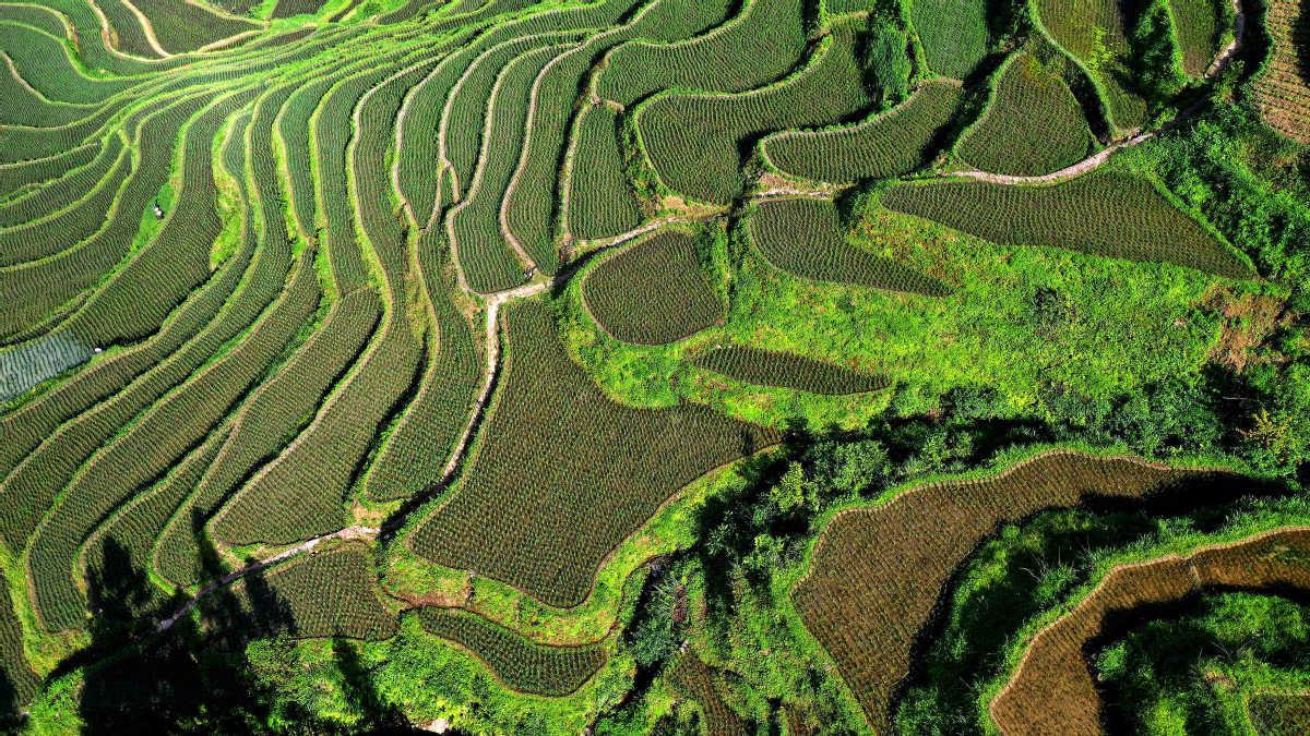 Guizhou's lush landscape emerges