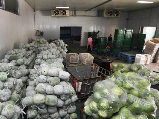 Langfang enhances quality control to ensure Beijing's market supply, vegetable safety