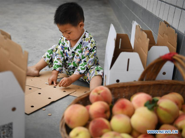Family sells peaches to shake off poverty in Shaanxi
